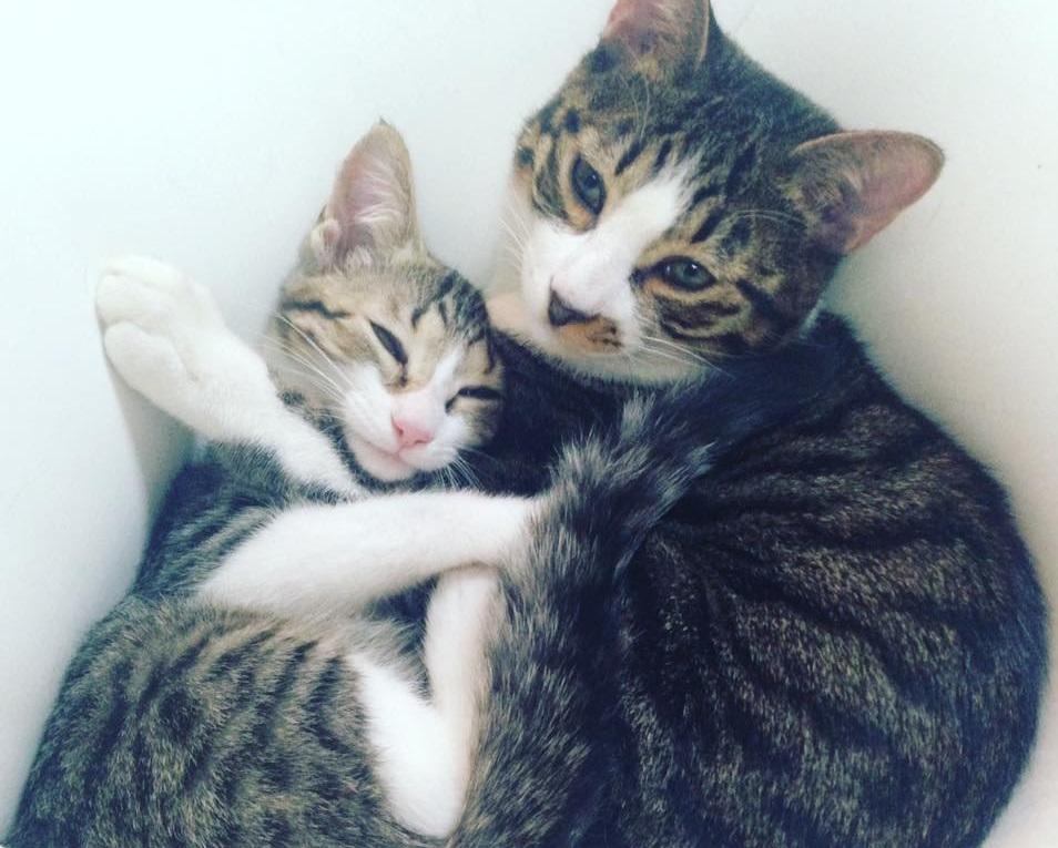 猫共生型賃貸住宅「necoto」のサムネイル