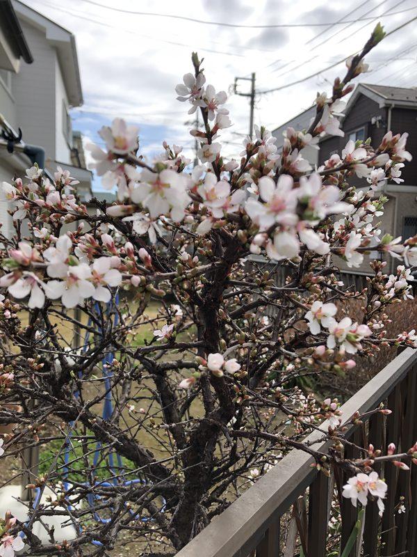 【平塚支店】春が来た♬